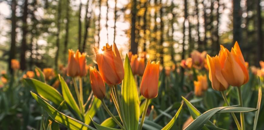 Öppettider påsk och valborg
